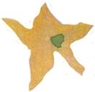 étoile01